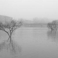 большая вода.. :: Ирина Лепихина