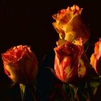 розы :: Григорий Карамянц