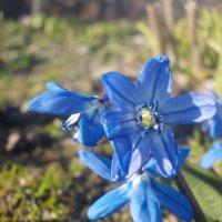 цветики :: Екатерина Кононенко