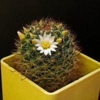 Весной, даже колючие блондинки цветут -:))) :: Александр Запылёнов