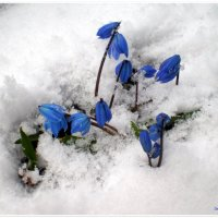 Милашки в снегу :: Татьяна Пальчикова