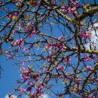 Португальская весна :: Alexey Bogatkin