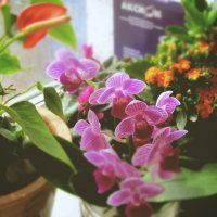 Весна на подоконнике .... :: Larisa Zigelman