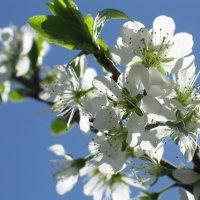 Весна :: Надежда Рябинина