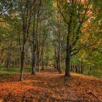 Осенний  городской парк :: Nikita Volkov