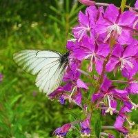 Бабочка и цветок :: Александр Щеклеин