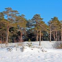 Сосновый бор у Белого моря :: Владимир Шибинский