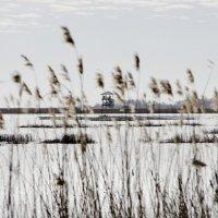 Весна на Лиепайском озере (7) :: Сергей Садовничий