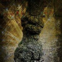 Страшная сказка о заколдованном дереве. :: Ольга Кривых