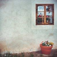 Sweet home :: Марина Рязанцева