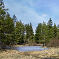 лесное озеро :: Наталья Ерёменко