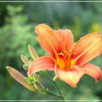 цветочек :: Андрей Словин