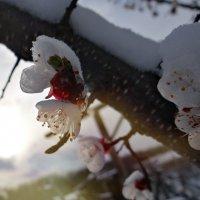 29/03/14 :: Виолетта Ляшенко