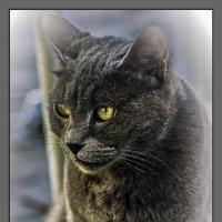 Ален Делон из нашего двора или ода коту- из серии  Кошки очарование мое! :: Shmual Hava Retro