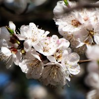 Весна :: Александр *