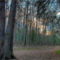 Весенний лес :: Nikita Volkov