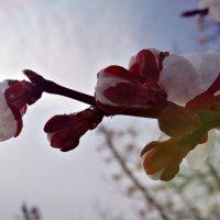 09.03.14 :: Виолетта Ляшенко