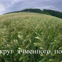 Вокруг ячменного поля :: Валерий Талашов