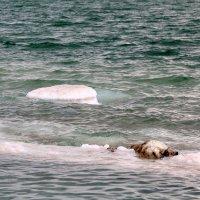 мёртвая вода.... живая вода... :: Татьяна Сухова