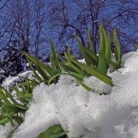 Снег выпал :: Мария Климова