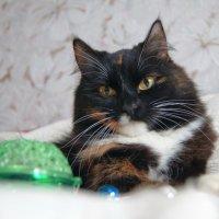 Вредная кошачья морда :: Анна Агеева