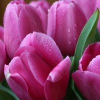 море тюльпанов :: Марат Макс