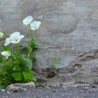 Красота и цемент :: NICKIII Михаил Г.