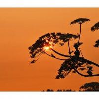 Посиделки на закате.. :: Марина Павлова