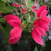 Не знаю как это растение называется. :: Sergey Serebrykov