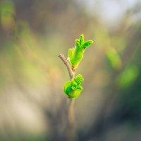 Весна пришла... :: Сергей Пилтник