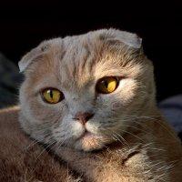 Кусочек мартовского солнца...Но...март и солнце за окном... А мне лишь грусть о том... :: Татьяна Койнова