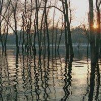 Разлив реки :: Dasha Darsi
