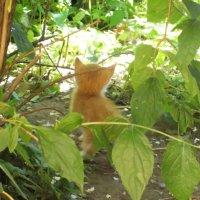 Рыжий маленький котенок - 1 :: Фотогруппа Весна-Вера,Саша,Натан