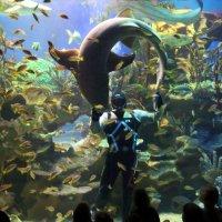Шоу с акулами :: Aнна Зарубина