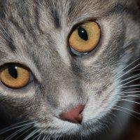 глаза моей кошки :: NюRа;-) Ковылина