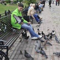 Кормление голубей :: Ирина Токарева