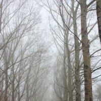 Осенний  туман .   п  Усть - Абакан :: Виктор