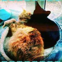 Кот уселся с кошкой рядом. Долго думали они.Что ешё для счастья надо? Солнце светит.Бог хранит. :: Ольга Кривых