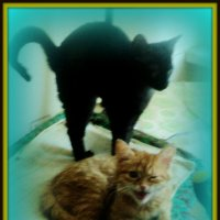 Что такое красота? Это дом, где два кота! :: Ольга Кривых