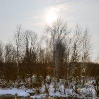 Зимний ручей :: Сергей Лошкарёв