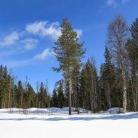 Обожаю наш лес!) :: Лариса Сафонова