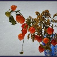 Засохшие цветы :: Виктор Бельцов