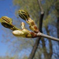весна пришла :: юрий