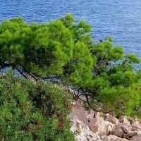 И на камнях растут деревья... :: Ростислав