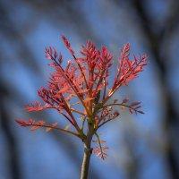 весенний факел :: Sergey Bagach