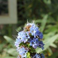 Цветение в Ботаническом саду. :: Дина Нестерова