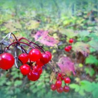 Красное на зеленом) :: Лариса Карпушина