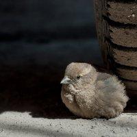 Воробей в капкане :: Андрей Поляков