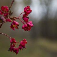 Непонятные цветочки :: Elena Vershinina