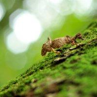 """Из серии """"Таинственный лес"""" :: Asya Piskunova"""